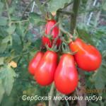 1сербская медовина арбуз (3)
