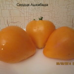 1сердце ашхабада плод в разрезе (16)