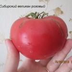 1сибирский великан розовый2