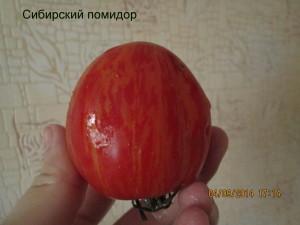 1сибирский помидор