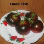 1синий ОСУ1 (4)