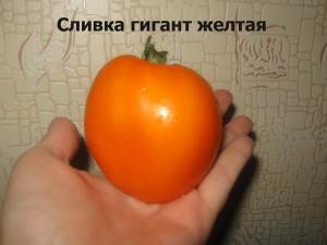 1сливка гигант желтая (7)