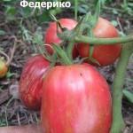 1федерико (1)