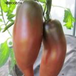 1фиолетовый весселя (8)