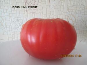 1червонный гигант (6)