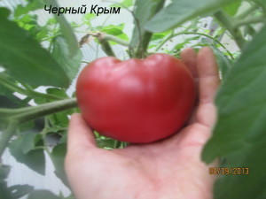 1черный крым1