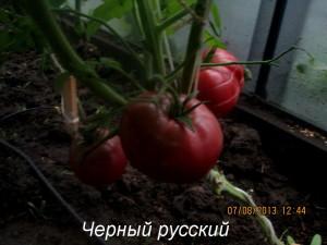 1черный русский3 (7)
