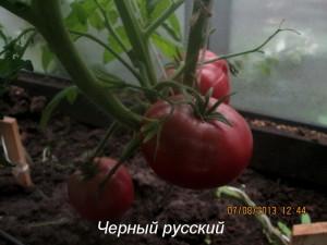 1черный русский3 (8)