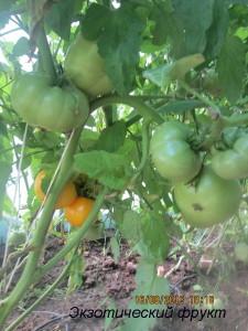 1экзотический фрукт (2)