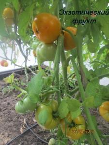 1экзотический фрукт (3)