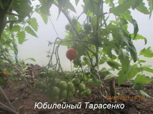 1юбилейный тарасенко (1)
