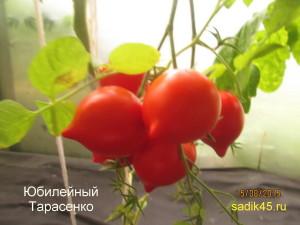 1юбилейный тарасенко (2)