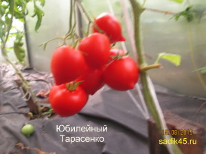 1юбилейный тарасенко (3)