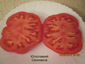 1югославский сенкевича (6)