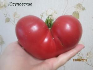 1юсуповские (11)