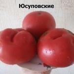 1юсуповские (15)
