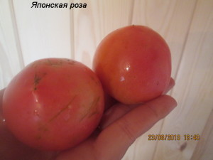 1японская роза2 (1)