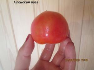 1японская роза2 (2)