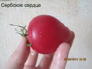 4сербское сердце (5)