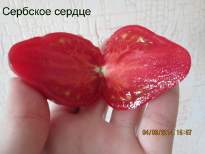 4сербское сердце (6)