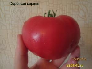 4сербское сердце (8)