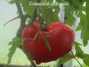 6славский розовый