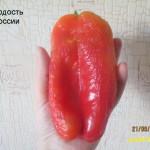 гордость россии (2)