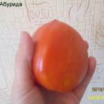 абурида (1)