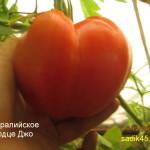 австралийское сердце джо1 (4)