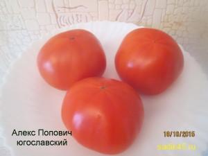 алекс попович югославкий1 (1)