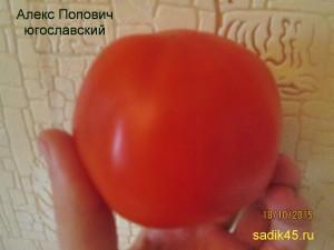 алекс попович югославкий1 (2)