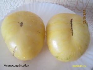 ананасовый кабан1 (1)