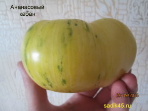 ананасовый кабан1 (6)