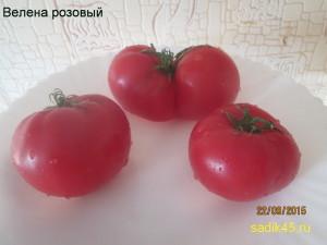 велена розовый1 (4)