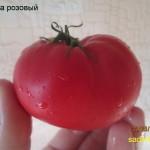велена розовый1 (5)