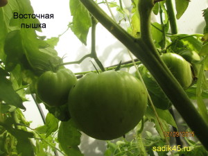 восточная пышка1 (4)