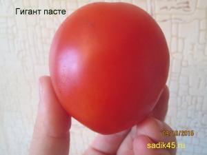 гигант пасте1 (2)