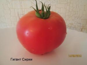 гигант сирии1 (3)
