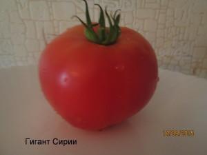 гигант сирии1 (7)