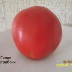 гилдо петробони1 (4)