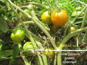гном дельта дивер красный1 (11)