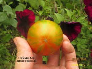 гном дельта дивер красный1 (4)