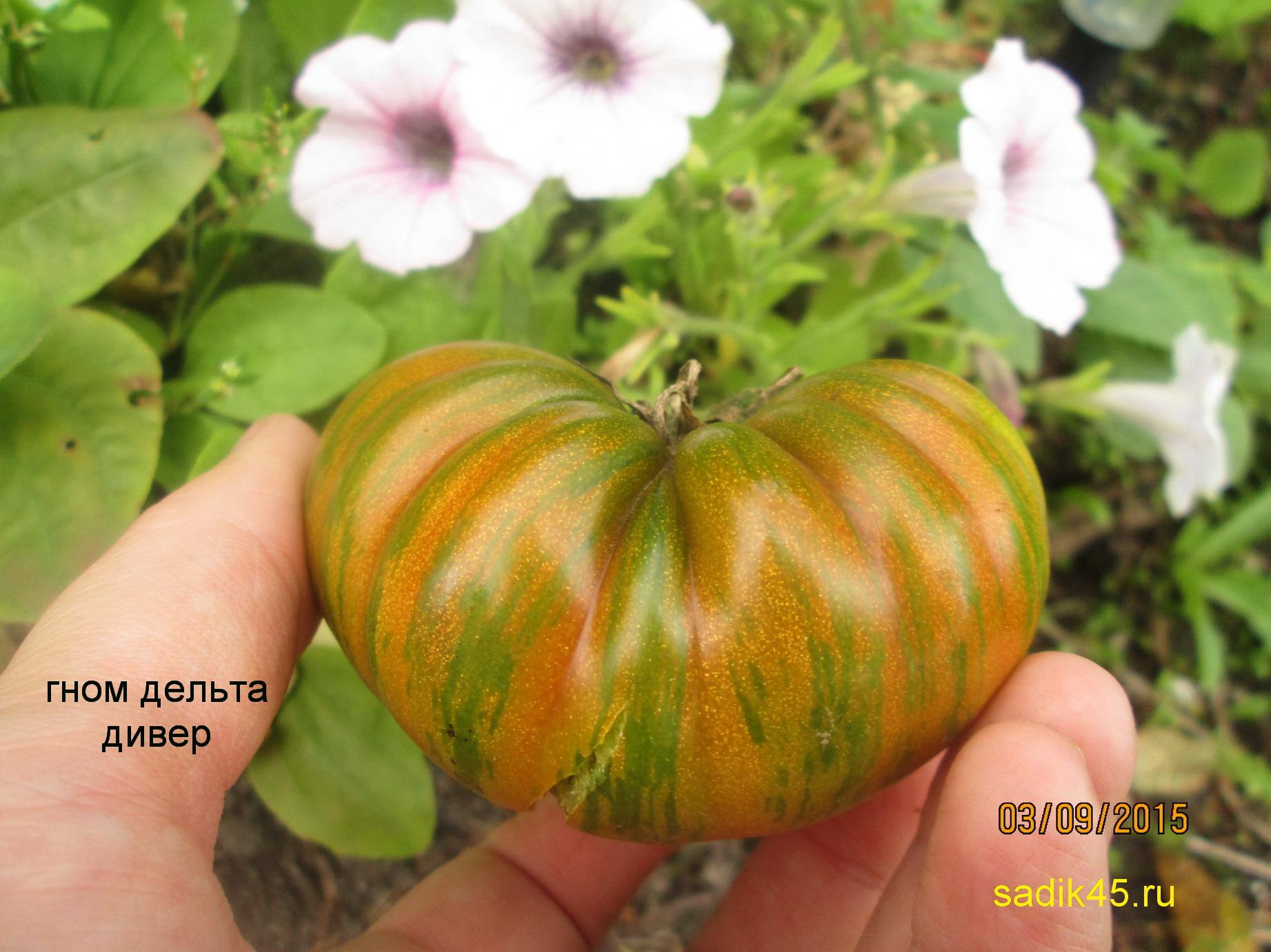 Помидоры. Выращивание томатов. Сорта и рассада 54