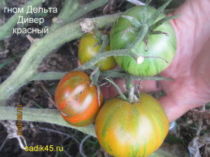 гном дельта дивер красный1 (9)