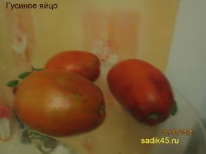 гусиное яйцо1 (2)