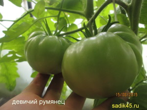 девичий румянец1 (11)