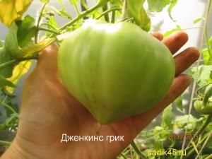 дженкинс грик1 (8)