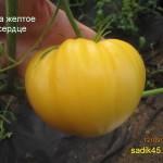 ева желтое сердце1 (1)
