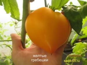 желтые гребешки11 (10)