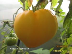 желтые гребешки11 (11)